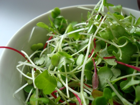 Research suggests that microgreens contain more nutrients that their full-sized versions. (Image: Rustik Magazine)